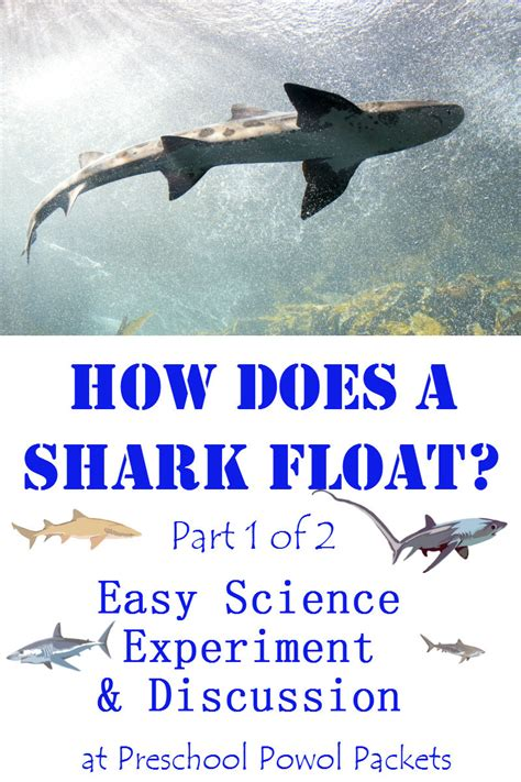 How Sharks Float Science Experiment: Part 1 (of 2