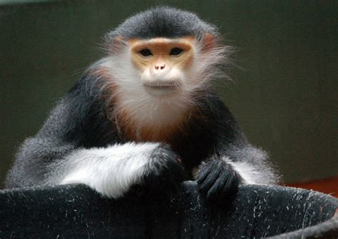 Asia's Unknown, Ignored And Disappearing Animals | HuffPost