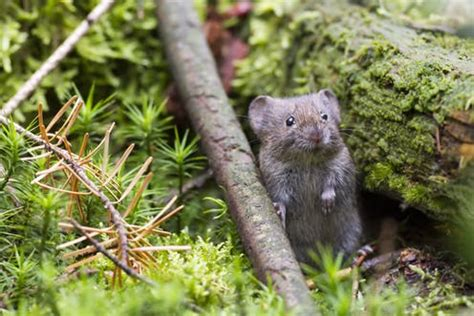 Revealed: why some animals and plants will thrive under