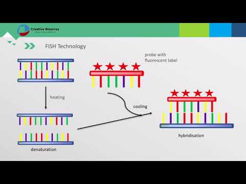 IF-combined smRNA FISH reveals interaction of MCPIP1